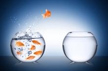 fish escape concept