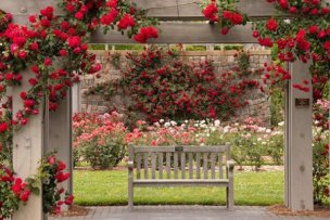 beautiful-rose-garden-romantic-red-roses-garden-bench