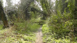 15-fallen-tree-across-the-path