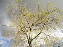 220px-spring_in_stockholm_2016_28229