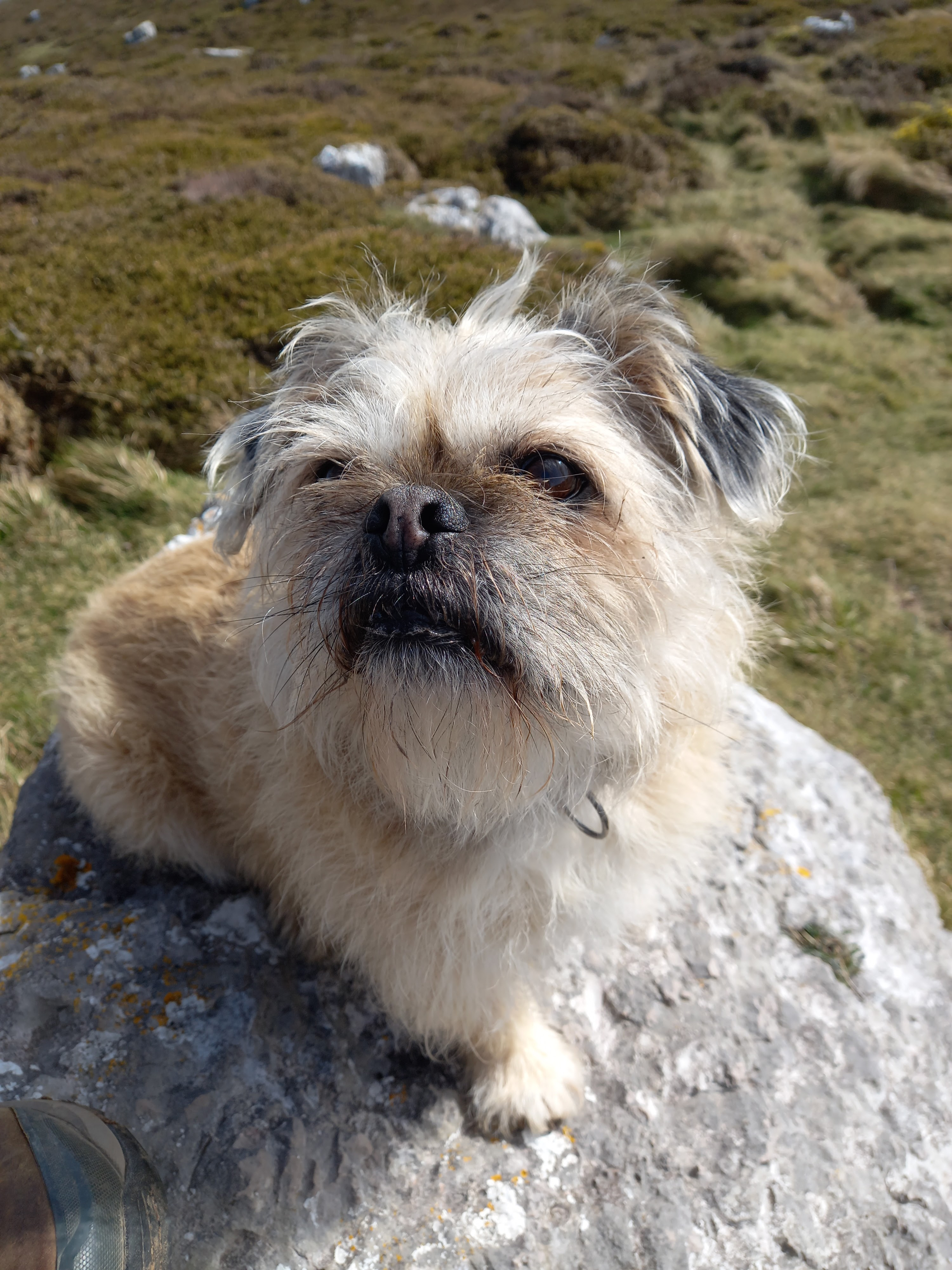 Diane Woodrow's dog, Renly, sitting on a rock looking up lovingly