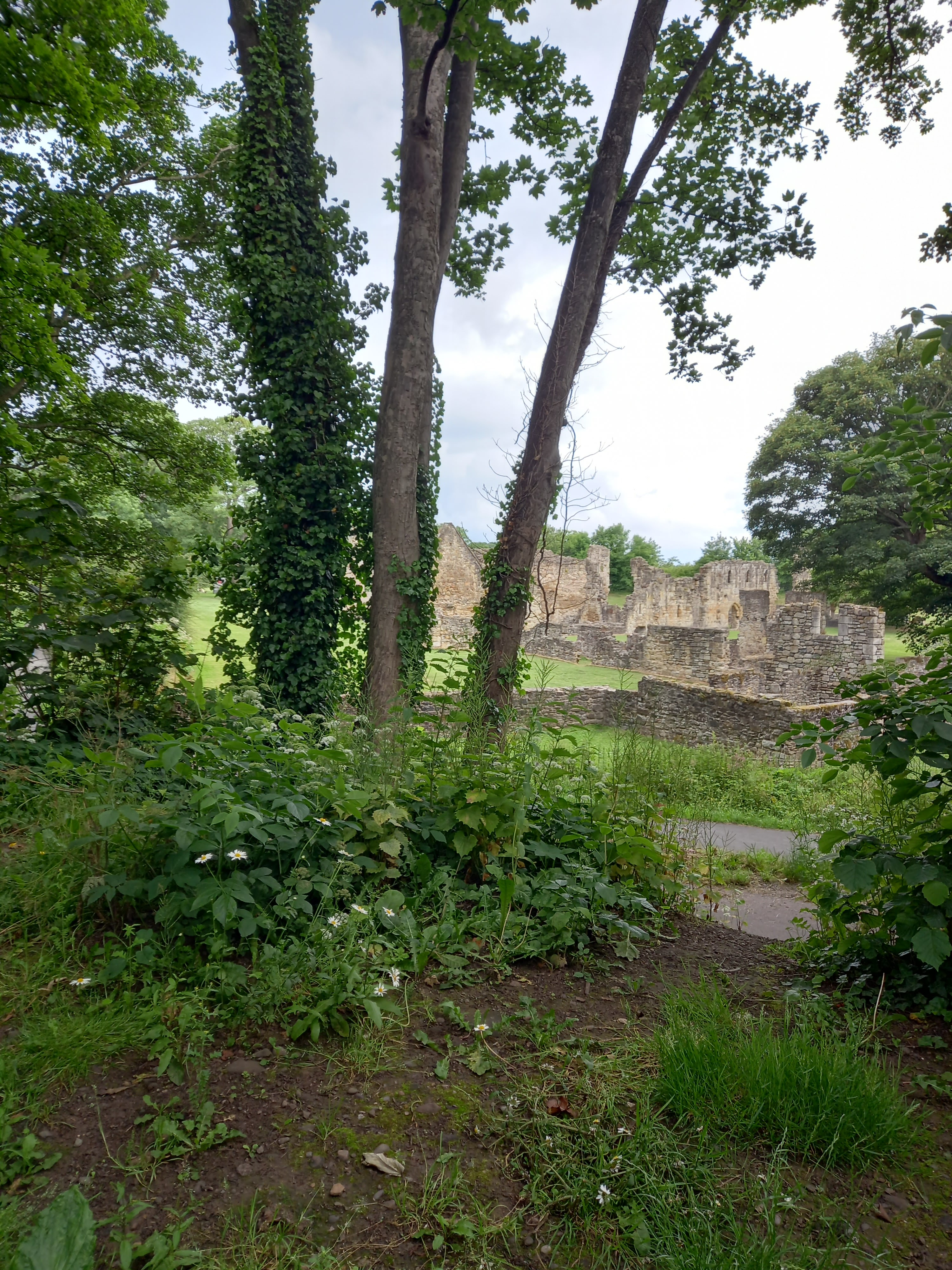 Basingwerk Abbey, Holywell, viewed through the trees on a walk around Holywell taken by Diane Woodrow, author of The Little Yellow Boat