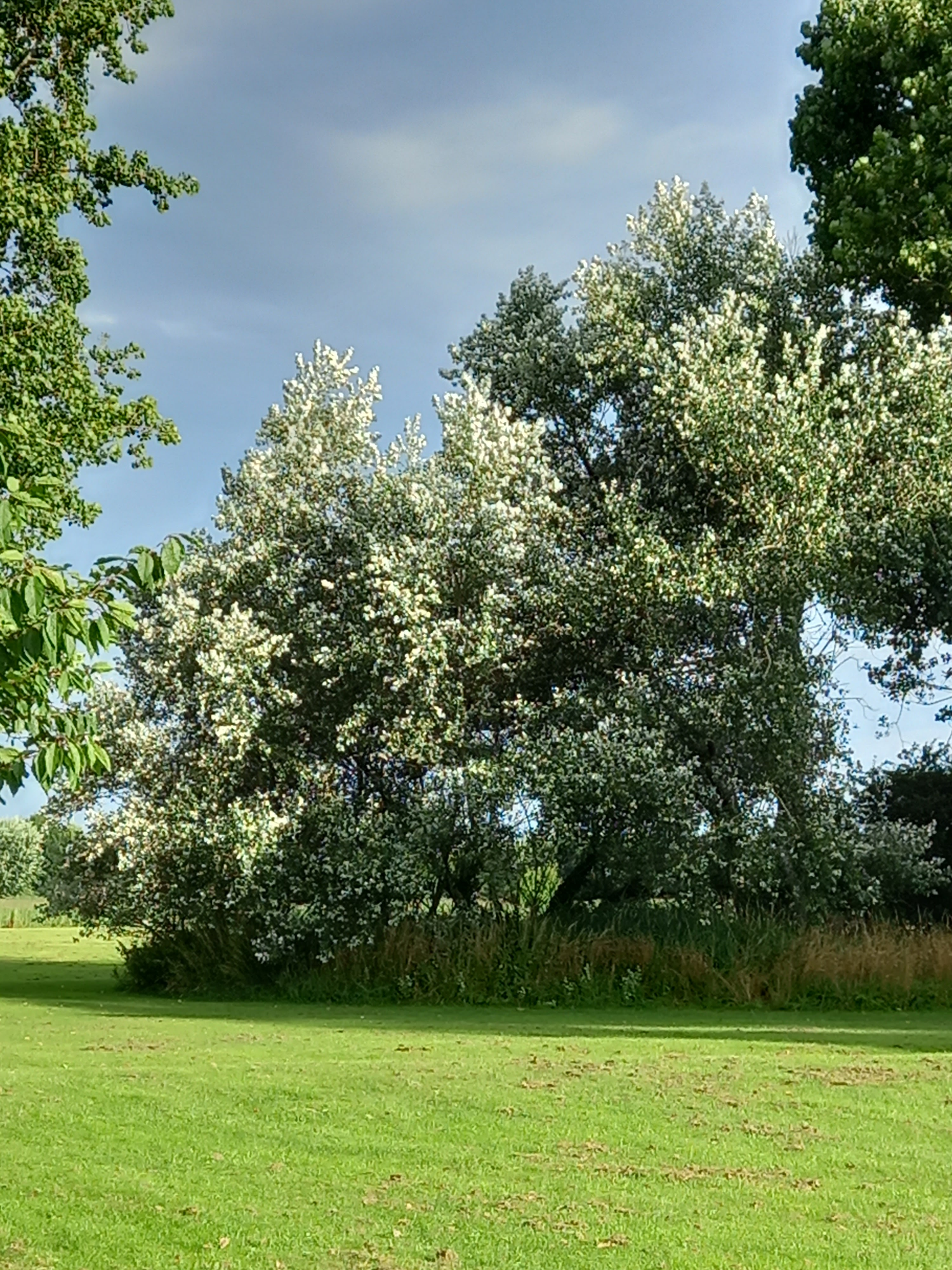 Trees fluttering and dancing in a light breeze last Sunday afternoon. Taken by Diane Woodrow