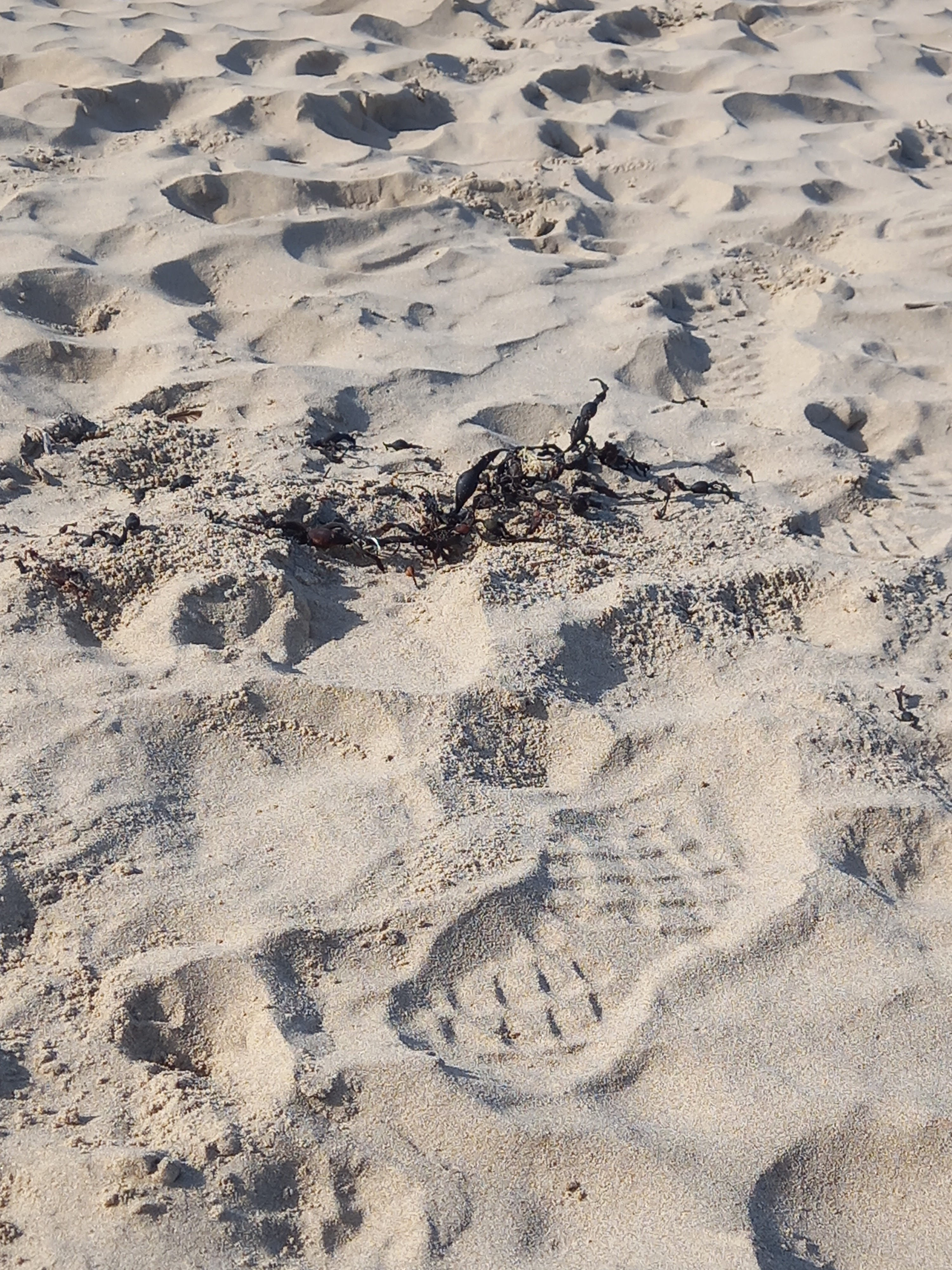 A photo of a boot print in soft sand with a piece of seaweed nearby. photographed by Diane Woodrow
